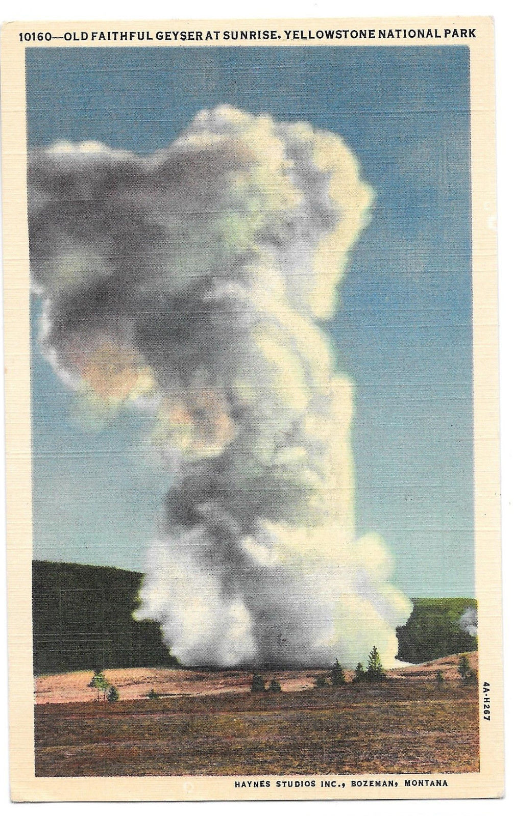 WY Yellowstone Old Faithful Geyser at Sunrise Vtg Haynes Linen Postcard