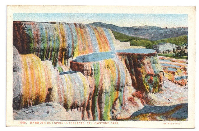 Yellowstone National Park Mammoth Hot Springs Terraces Vtg Haynes Postcard 11148