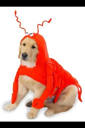 New Casual Canine Lobster Costume - XSMALL - Fast Ship!