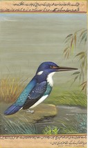 Blue Banded Kingfisher Painting Handmade Indian Miniature Wild Life Natu... - $104.99