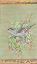 American Gray Catbird Art Handmade Indian Miniature Ornithology Nature P... - $89.99