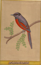 Long Tail Bird Art Watercolour Indian Tropical Handmade Colorful Ethnic ... - $54.99