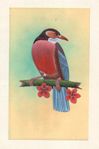Red Breasted Bird Miniature Painting Handmade India Watercolor Paper Eth... - $69.99