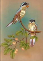 Miniature Bird Art Original Watercolour Tropical India Handmade Folk Pai... - $53.99