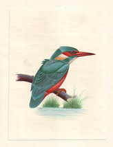 Kingfisher Bird Miniature Painting Handmade Watercolor Paper Ethnic Folk... - $69.98