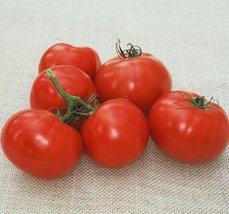 2000 Seeds of Oregon Spring V - Tomatoes Early Season - $59.40