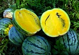 HeirloomSupplySuccess 10 Heirloom Early Moonbeam watermelon seeds  - $3.99