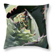Impression, Throw Pillow, seat cushion, fine art photo, cactus, cacti - $41.99+