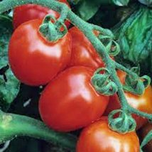 Tomato, Italian Roma, Heirloom, 21+ Seeds, Delicious RED Tasty Fruit - $1.99