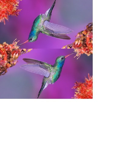 Primary image for Pretty Colorful Hummingbird Checkbook Cover Hummingbird