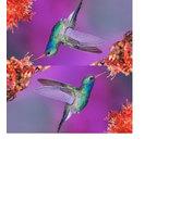 Pretty Colorful Hummingbird Checkbook Cover Hummingbird - $5.99