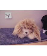 furreal friends Large  Tan Shaggy Interactive Animated  dog - $24.99
