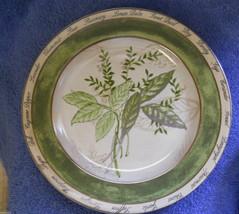 American Atlier Bouquet Garni salad plate sage fennel - $3.91