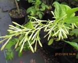 Img 0108 thumb155 crop