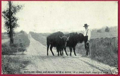 SUNFIELD MICHIGAN Boyer Buffaloes Davis B&W