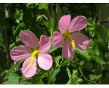 Efn native plants 367 thumb155 crop