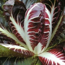 SHIP From US, 300 Seeds Radicchio Seeds, DIY Healthy Vegetable AM - $33.99