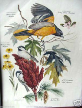 Singer: Chickadee with Orioles; New England plants - $35.00
