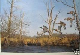 Settling In by Richard Plasschaert; Mallard Ducks - $215.00