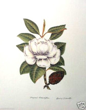 Fragrant Graniflora by Barbie Tidwell - etching - $125.00