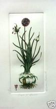 Dash O'Garlic by Barbie Tidwell - etching - bot... - $125.00