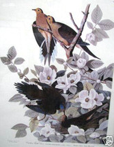Audubon: Carolina Turtle Doves; Number 1240 of 2000 - $250.00