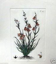 Horebell by Dan Mitra - Etching-botanical - $250.00