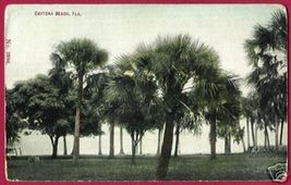 DAYTONA BEACH FLORIDA Palms 1910 Fl - $5.00