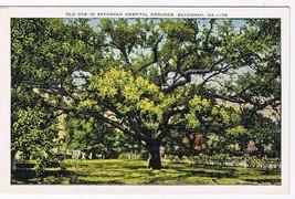 Georgia Postcard Savannah Ol Oak Savannah Hospital Grounds - $2.84