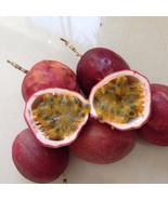 Fresh Passion Fruits ( 2 LBS ) - $39.99