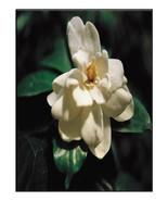 Flower8101-Digital Download-ClipArt-ArtClip-Dig... - $4.00