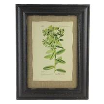"""Raz 16.5"""" Botanic Beauty Euphorbiaceae Print Burlap Accent Framed Wall Art - $28.30"""