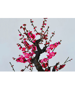 8pcs Very Amazing Flower Wintersweet Seeds Fragrant Red Chimonanthus IMA1 - $15.99