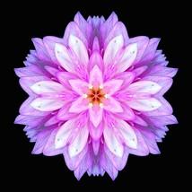 200 Pcs / Bag Dahlia Flower plants Mixed Colors (8), HZ Beautiful Flower... - $8.89