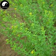 Buy St.Johnwort Herb Seeds 100pcs Plant Hypericum Perforatum Guan Ye Lia... - $5.99