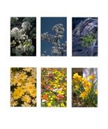 6 Flower 401-Download-ClipArt-ArtClip-Digital Tags - $4.00