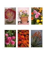 6 Flower 403-Download-ClipArt-ArtClip-Digital Tags - $4.00