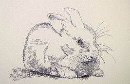 Bunny Rabbit Art Print #21 by Stephen Kline DRA... - $49.45