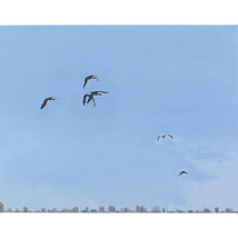 FLIGHT, A Portrait of Birds On The Wing - $1,000.00