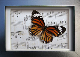 Vintage Music Paper Insect Art Real Butterfly Monarch in Display - $34.99