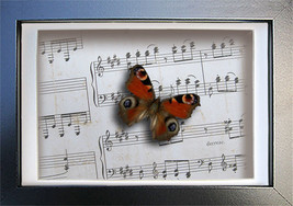 Vintage Music Paper With Real Peacock Butterfly Insect Art Display . - $29.99