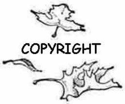 Falling Maple Leaves New Mounted Rubber Stamp - $4.50