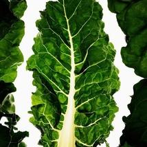 30 Seeds White stick beet Seeds Beta vulgaris Delicious Vegetable Seeds C154 - $13.58