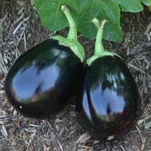 SHIP From US, 100 Seeds Amadeo Eggplant Seeds, DIY Healthy Vegetable AM - $39.99
