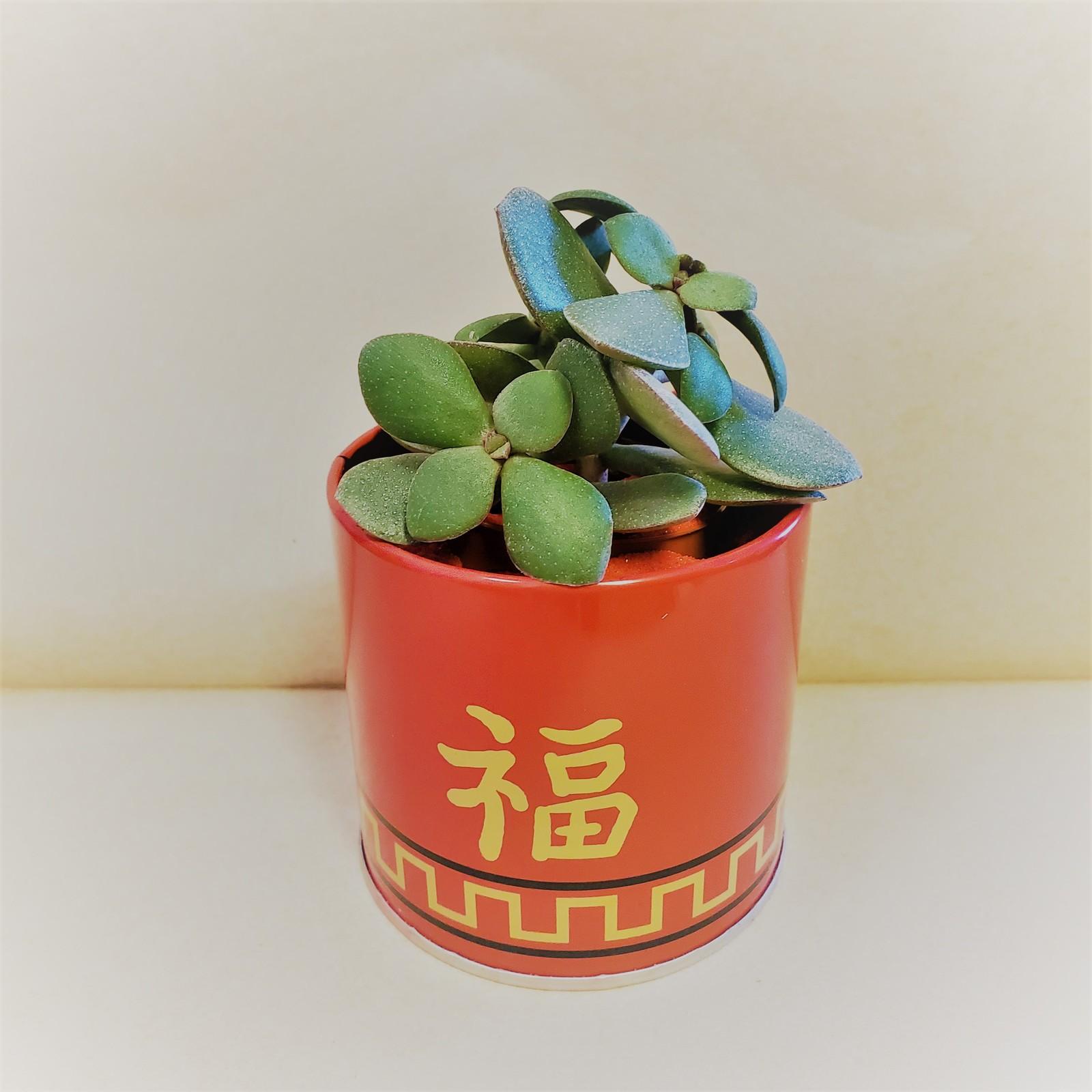 Jade chinesenewyear 1