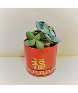 "Jade Plant in Red Gold Tin, 3"" Planter Succulent Crassula ovata Chinese ... - $14.99"