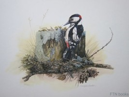 Marjolein Bastin # WOODPECKER # original litho,... - $92.22