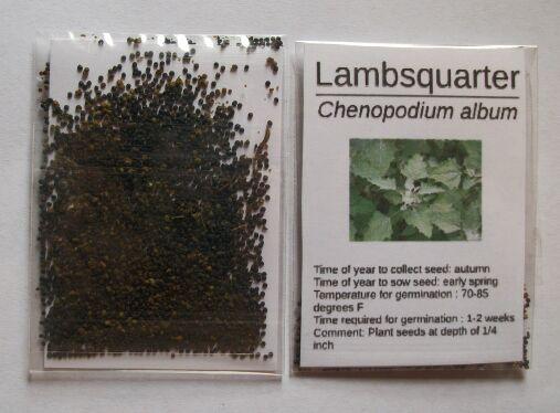 Lambsquarter (Chenopodium album) 500 Seeds