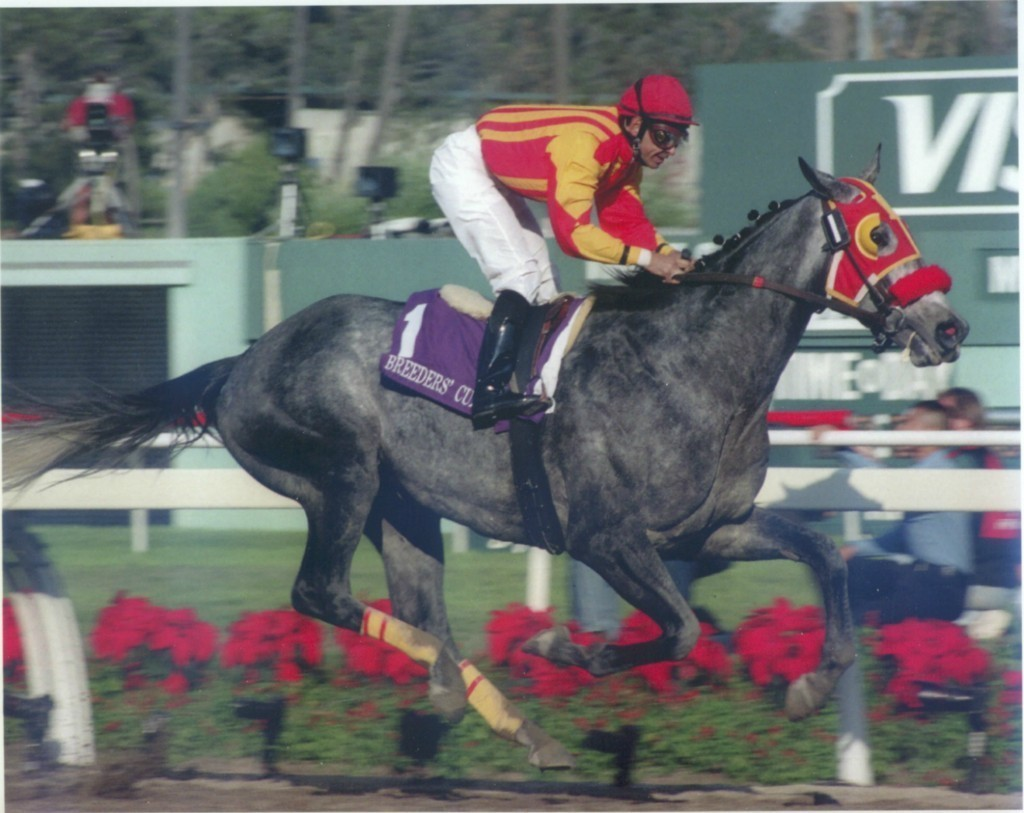 Primary image for DVD - 1997 BREEDERS' CUP: SKIP AWAY/Favorite Trick/COUNTESS DIANA/Chief Bearhar