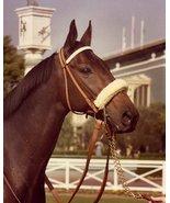 DVD - LEGEND of JOHN HENRY & MEMORIAL/Tribute...Two-Time HORSE of the YE... - $39.99